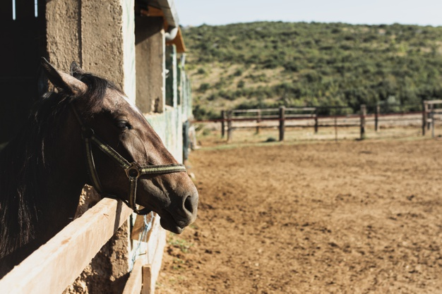 beautiful-horse-standing-with-head-outside-stable_23-2148315269